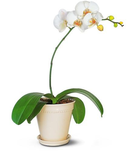 Best flowering indoor plants for rest