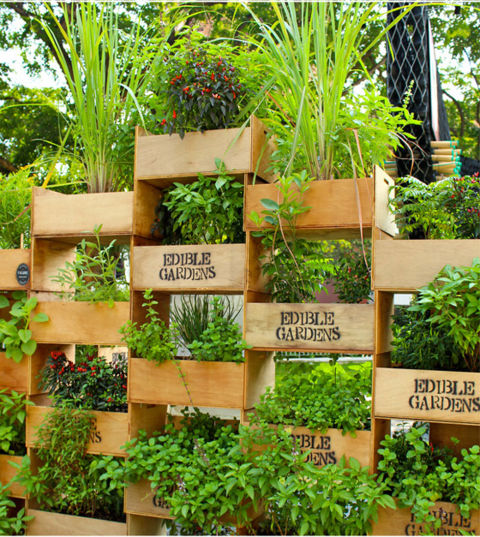 Vertical gardens in the city