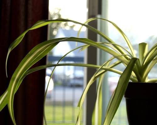 Best plants for indoor air quality in the cities