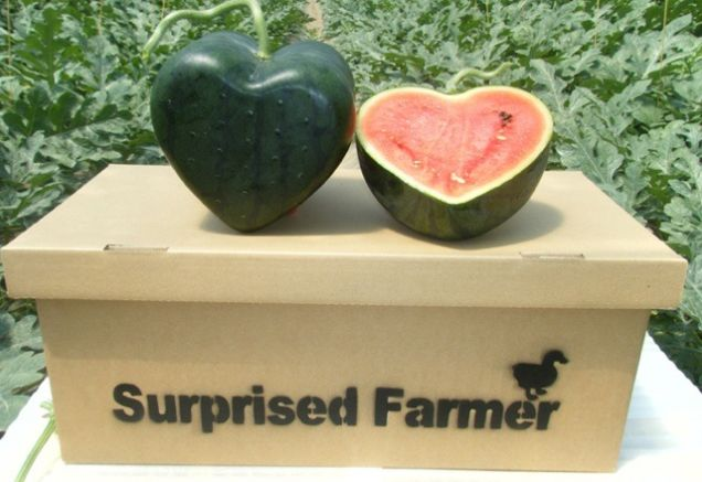 Square watermelons - how and why?