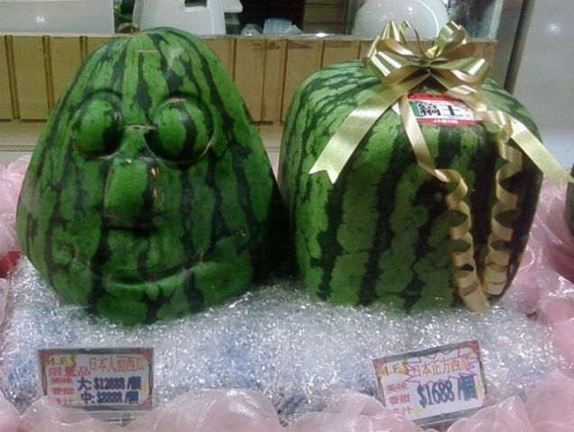 Square watermelons how and why - The worlds biggest rooftop farm nature reclaims its territory ...