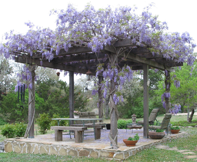 Pergola climbing plants nature 39 s roof - Pergola climbing plants under natures roof ...