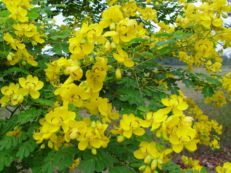 Trees that bloom yellow flowers in the garden