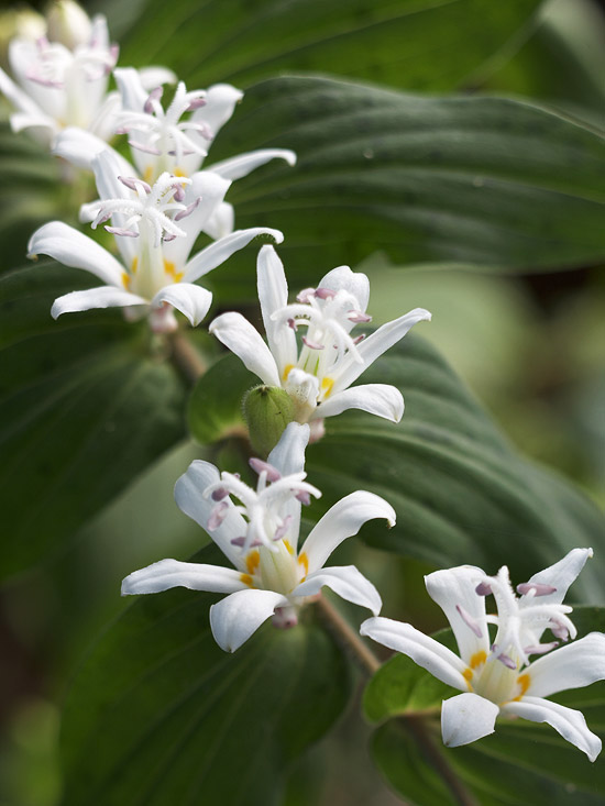 Best perennial plants for shade in the garden