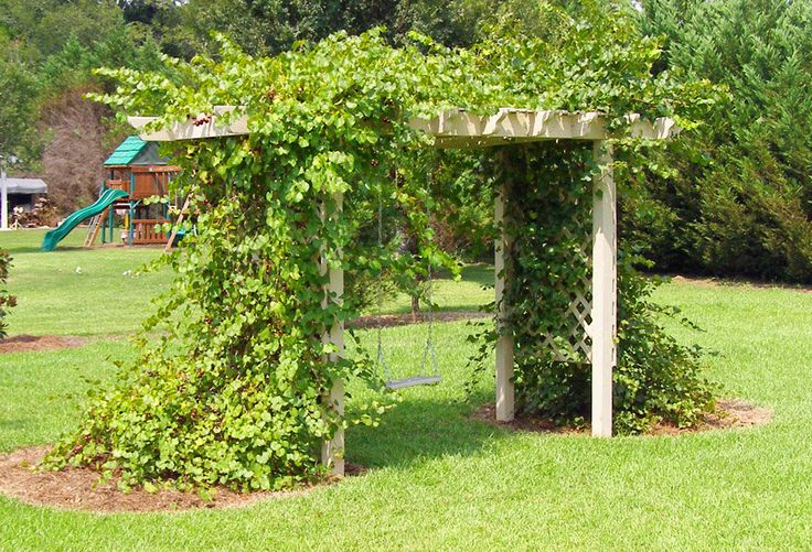How to build a grape vine support in the garden