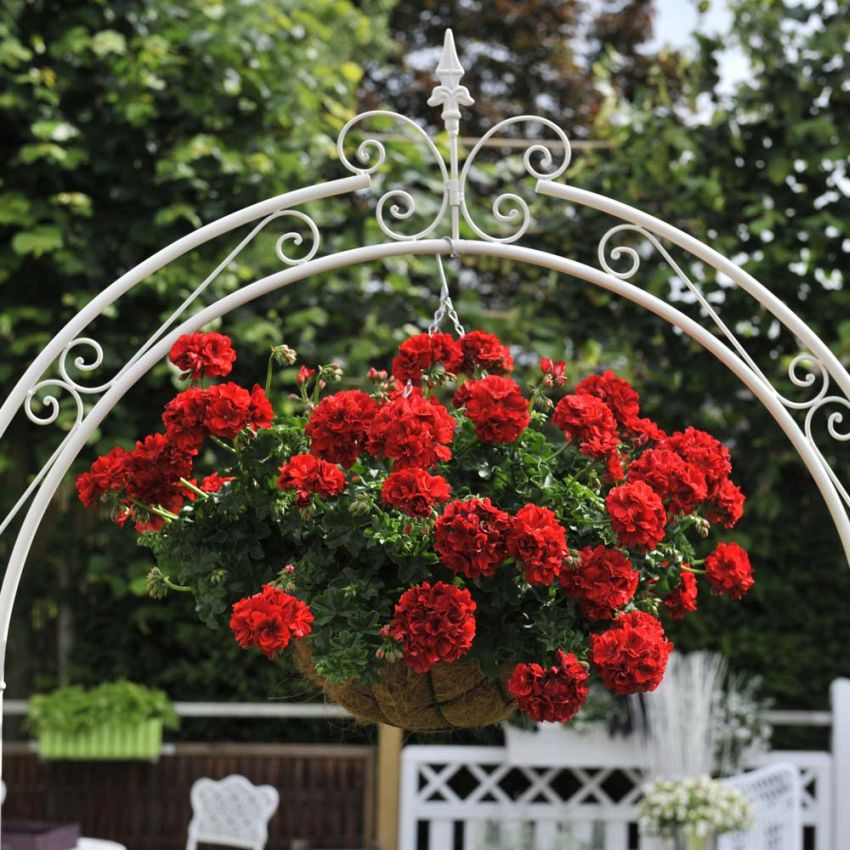 Hanging basket plants ideas at home