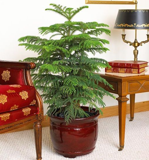 indoor plants that require little care. Black Bedroom Furniture Sets. Home Design Ideas