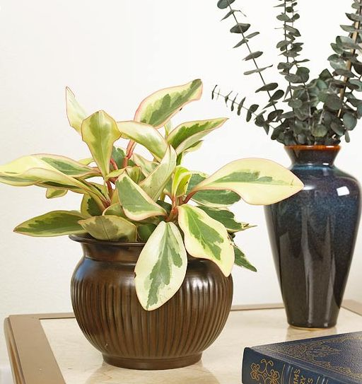 Indoor Plants That Require Little Care