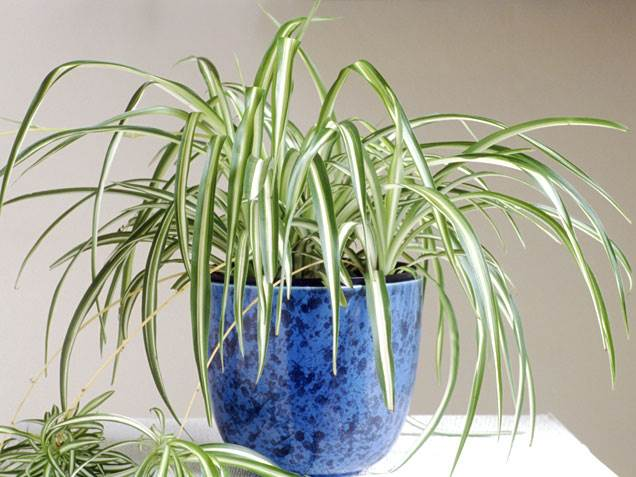 Indoor plants that require little care at home
