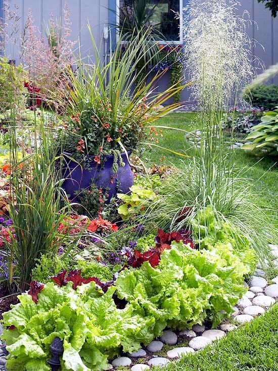 cele mai interesante legume decorative Decorative vegetable garden ideas 10