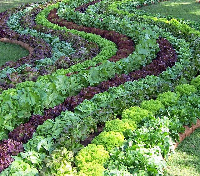 10 Creative Vegetable Garden Ideas: Decorative Vegetable Garden Ideas