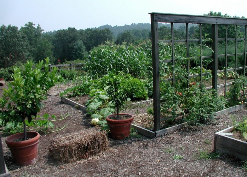 Decorative vegetable garden ideas for all