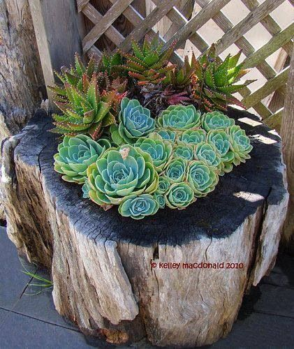 decoratiuni din buturugi Stump decorating ideas 5