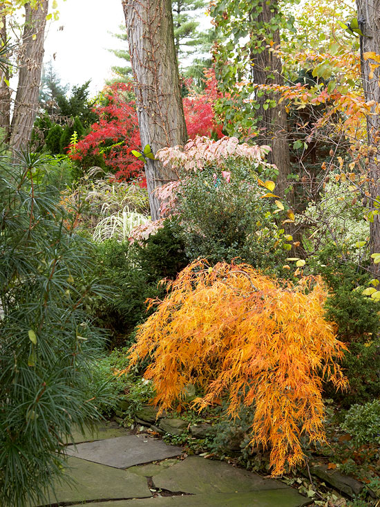 Fall Landscaping Ideas A Mosaic Of Colors Shapes And Scents
