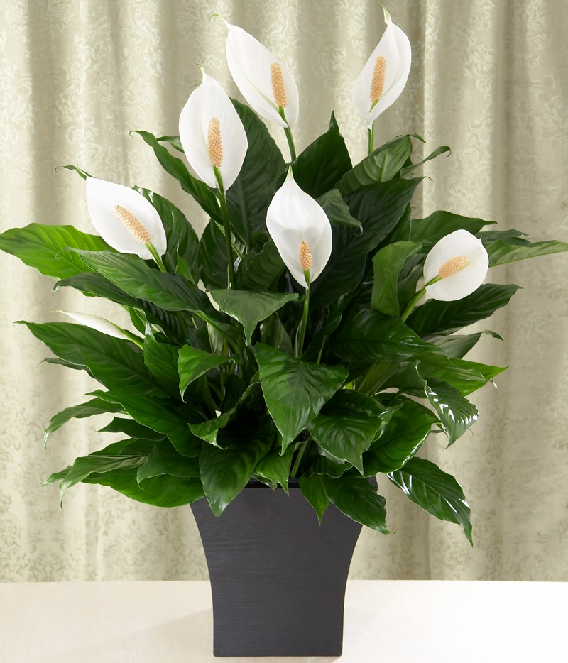 Plants for every room in your home extra comfort and health - Plants for every room in your home extra comfort and health ...