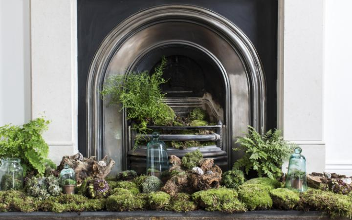 Plant decorating ideas at home