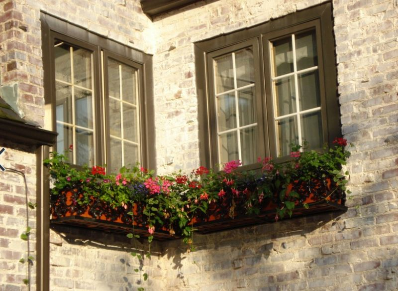 ferestre in stil englezesc English style window boxes