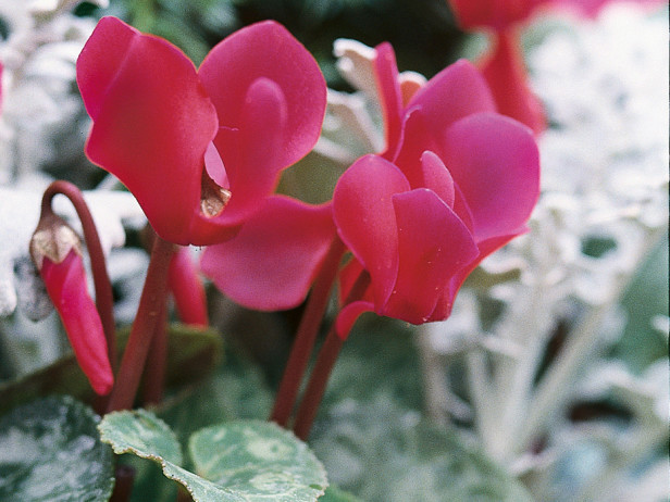 Winter perennial plants for all