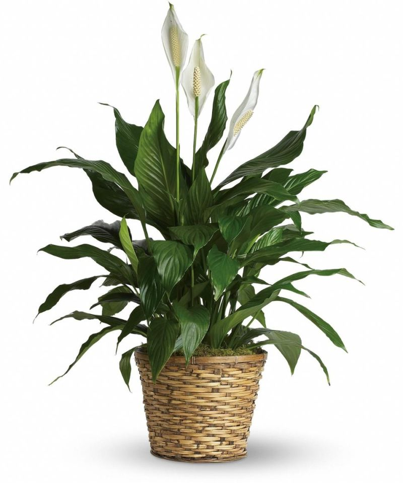 Indoor Plants That Absorb Humidity At Home