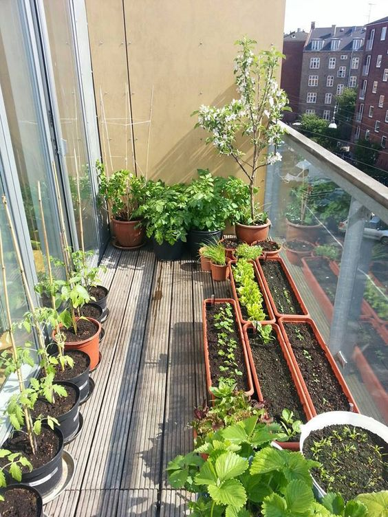 Small balcony garden ideas and tips houz buzz for Balcony garden
