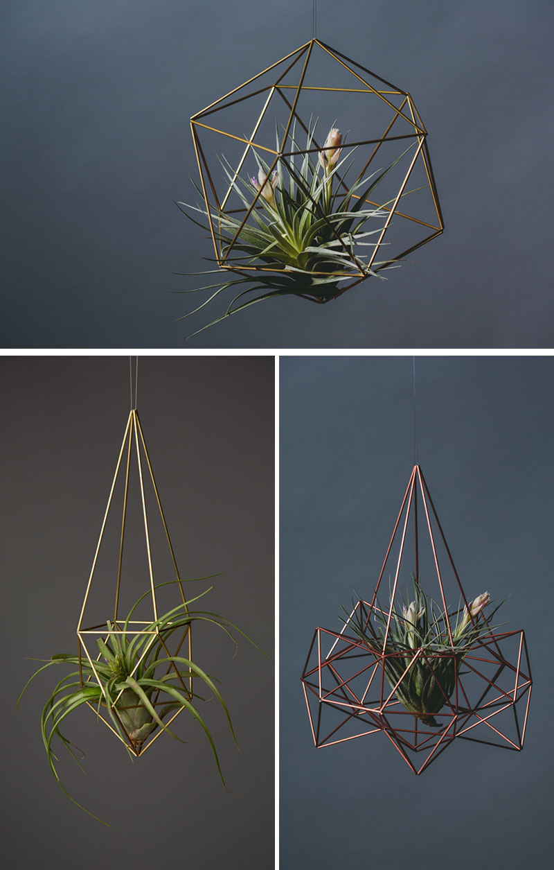 decoruri elegante cu plante care cresc fara pamant Elegant ways to display air plants in your home 10