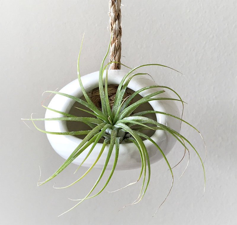 decoruri elegante cu plante care cresc fara pamant Elegant ways to display air plants in your home 11