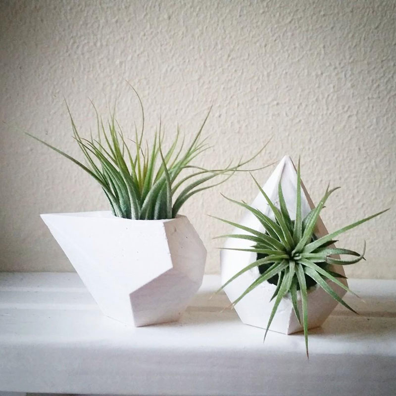 decoruri elegante cu plante care cresc fara pamant Elegant ways to display air plants in your home 13