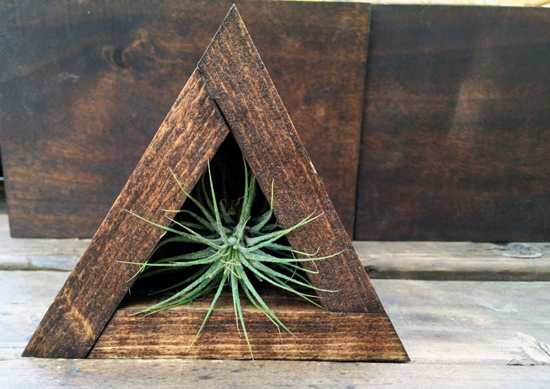 decoruri elegante cu plante care cresc fara pamant Elegant ways to display air plants in your home 3