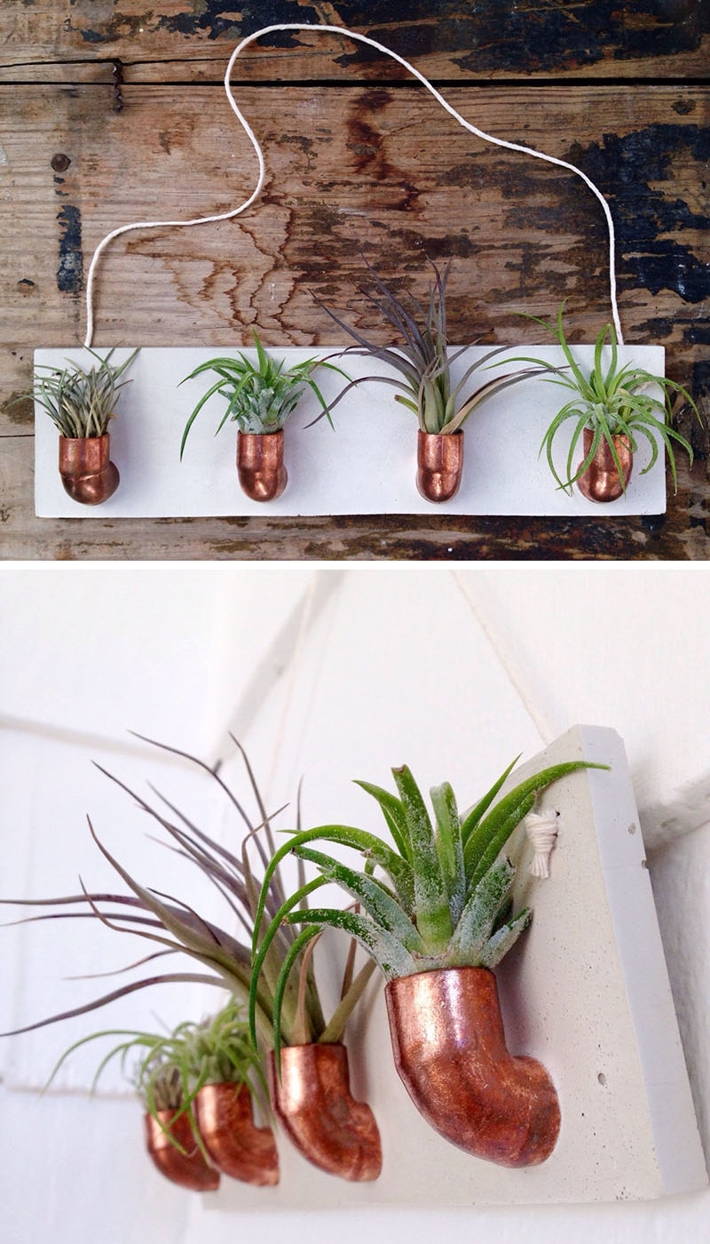 decoruri elegante cu plante care cresc fara pamant Elegant ways to display air plants in your home 6