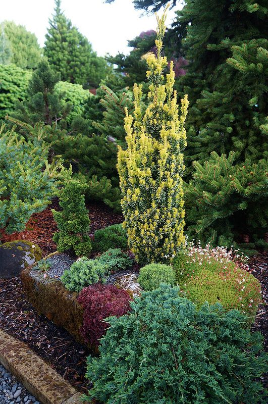 evergreen landscaping ideas - eternal oases