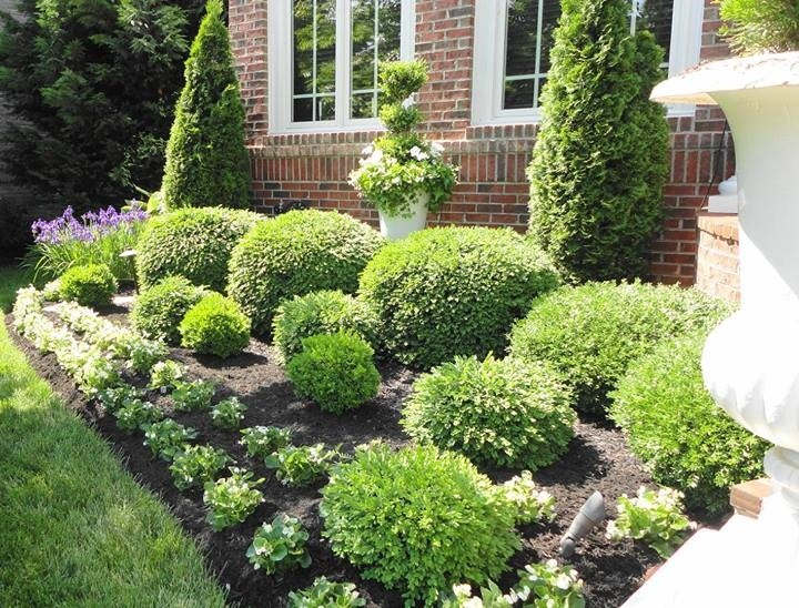 Landscaping with shrubs bringing shape and color into for Garden design ideas with hedges