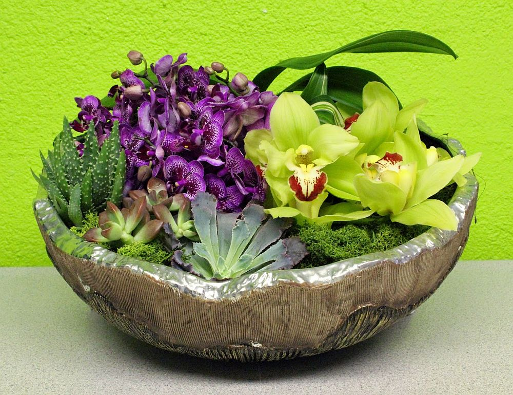 Ingrijirea orhideelor in ghiveci scurt ghid pentru un colt exotic case practice - How to care for potted orchids ...