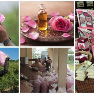 afacere cu trandafiri pentru ulei