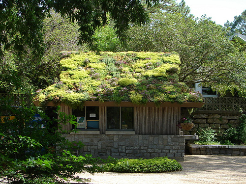 How To Build A Green Roof. Recipe