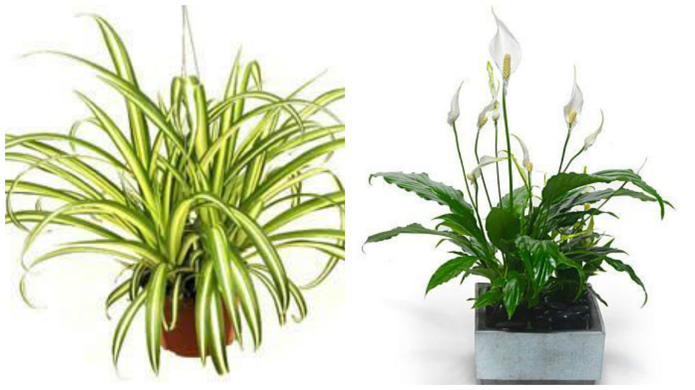 the healthiest houseplants to own