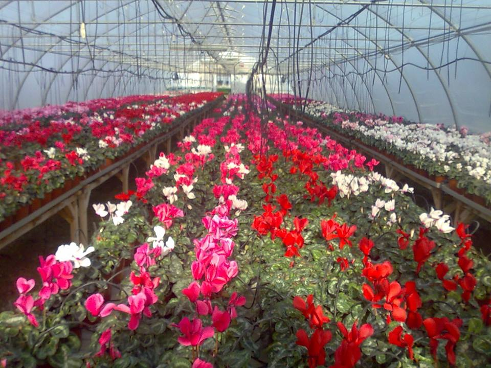 successful flower growing business